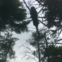 Maine Army National Guard Blackhawk helicopter raising a litter with the injured 14-year-old hiker.