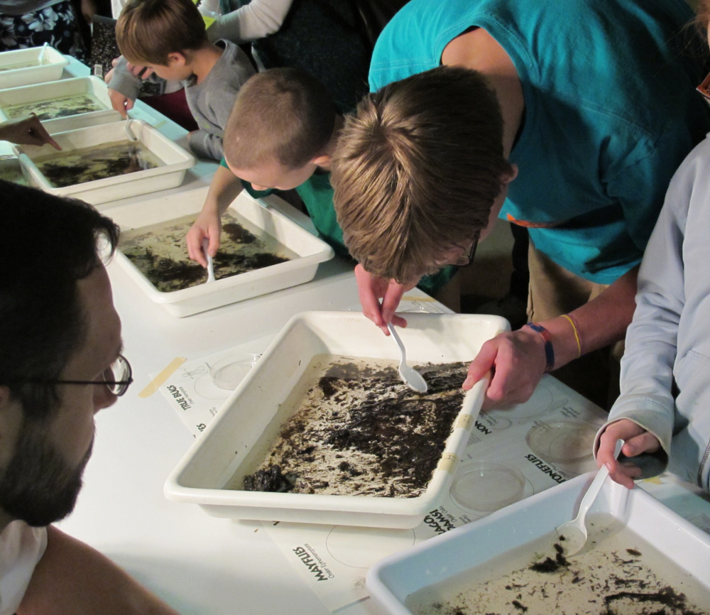 Young visitors examine live aquatic insects in one of the interactive displays at Bug Maine-ia to be held this year on Tuesday, Sept. 13, at the Maine State Museum.
