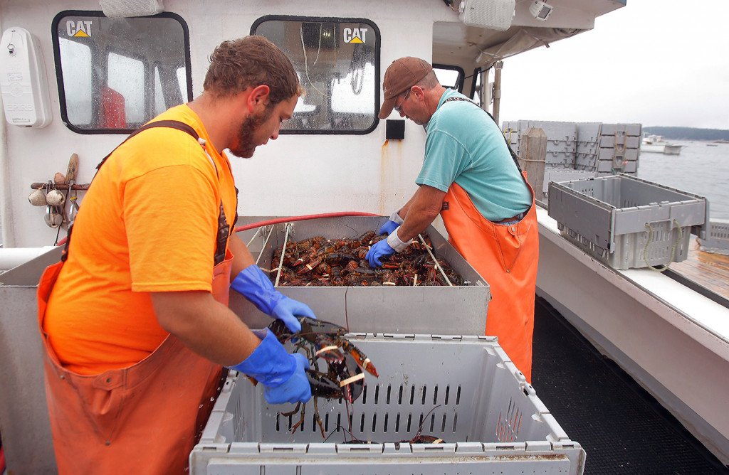 Vincent Barbato, left, and Francis Hardy transfer lobsters to crates while offloading the catch at Greenhead Lobster in Stonington on Thursday. The lobster council for Maine's Zone C, which includes the waters off Stonington, voted Thursday night to close the zone to new licensees. Gregory Rec/Staff Photographer