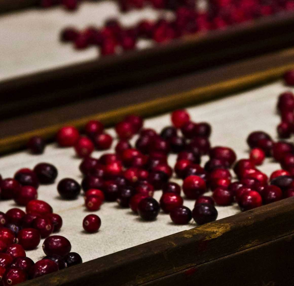 Cranberry harvest is underway, so now is the time to order a box of Maine-grown cranberries for your sauces and baked goods.