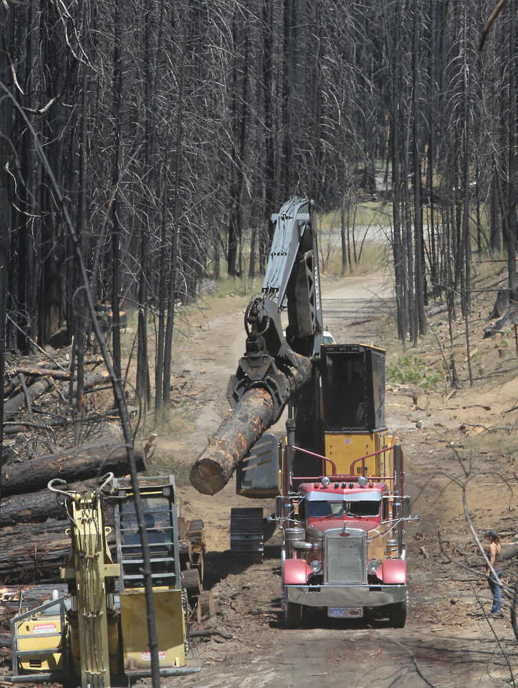 Drought and wildfire in previous years consumed millions of trees in California, but the situation this past summer was more severe, especially in the Sierra Nevada region.