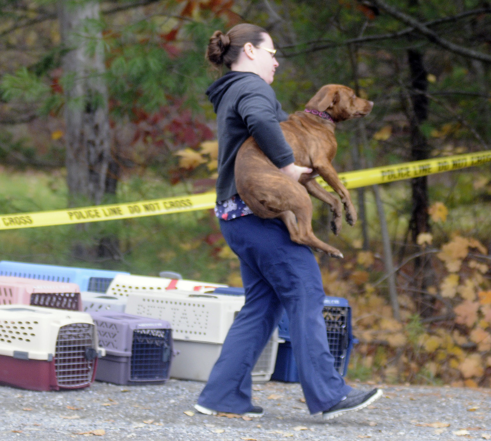 A dog is removed Monday from a Winthrop home where the bodies of Antonio and Alice Balcer, both 47, were found after an early morning 911 call. The Winthrop Veterinary Hospital, where Alice Balcer worked, is caring for pets removed from the home.