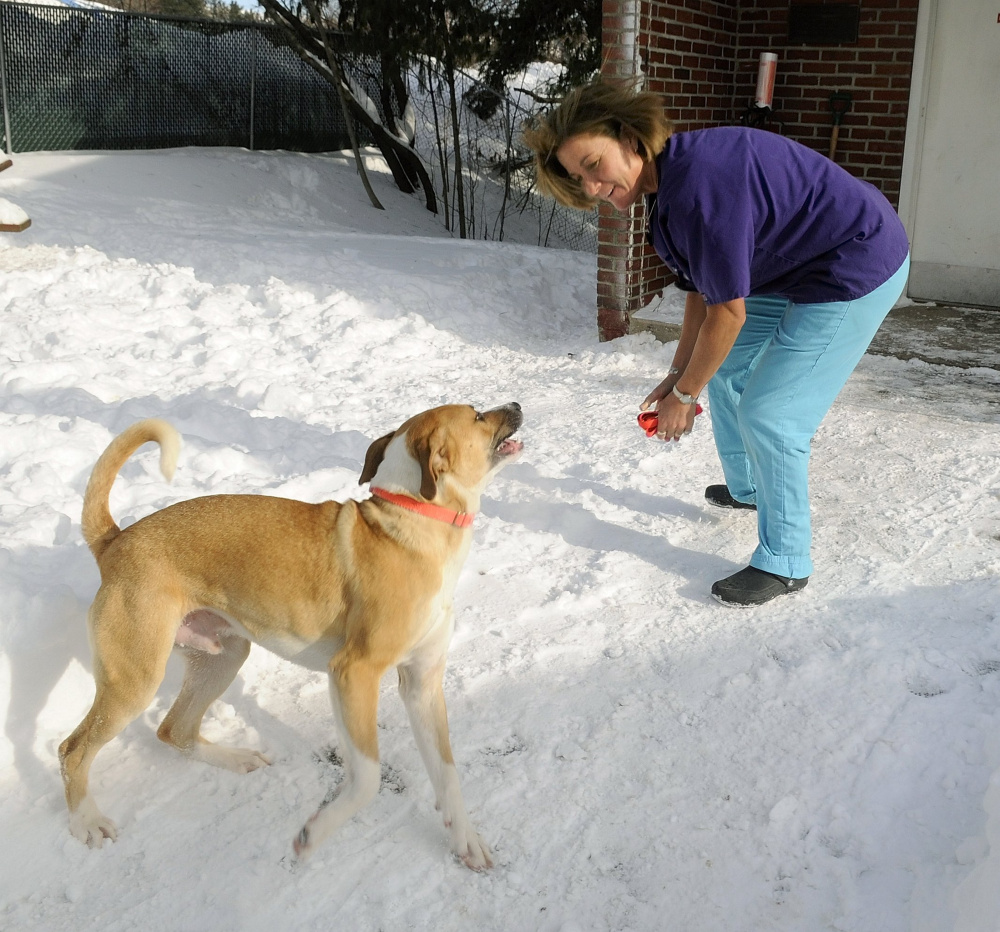 Animal care technician Alice Balcer plays with a dog in 2008 outside the Kennebec Valley Humane Society in Augusta. Balcer and her husband, Antonio, were killed Monday in their Winthrop home. The Winthrop Veterinary Hospital, where she worked most recently, is caring for the family's animals.