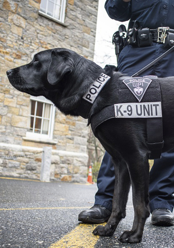 Campus police chiefs say a dog on college grounds helps them respond quickly to a crisis and can improve relationships with students.