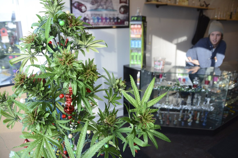 """A marijuana """"Christmas tree"""" sits in the window of Shire Glass, a fine tobacco shop on Main Street in Great Barrington, Mass, on Wednesday. On Thursday, a voter-approved measure legalized the possession of small amounts of recreational pot."""