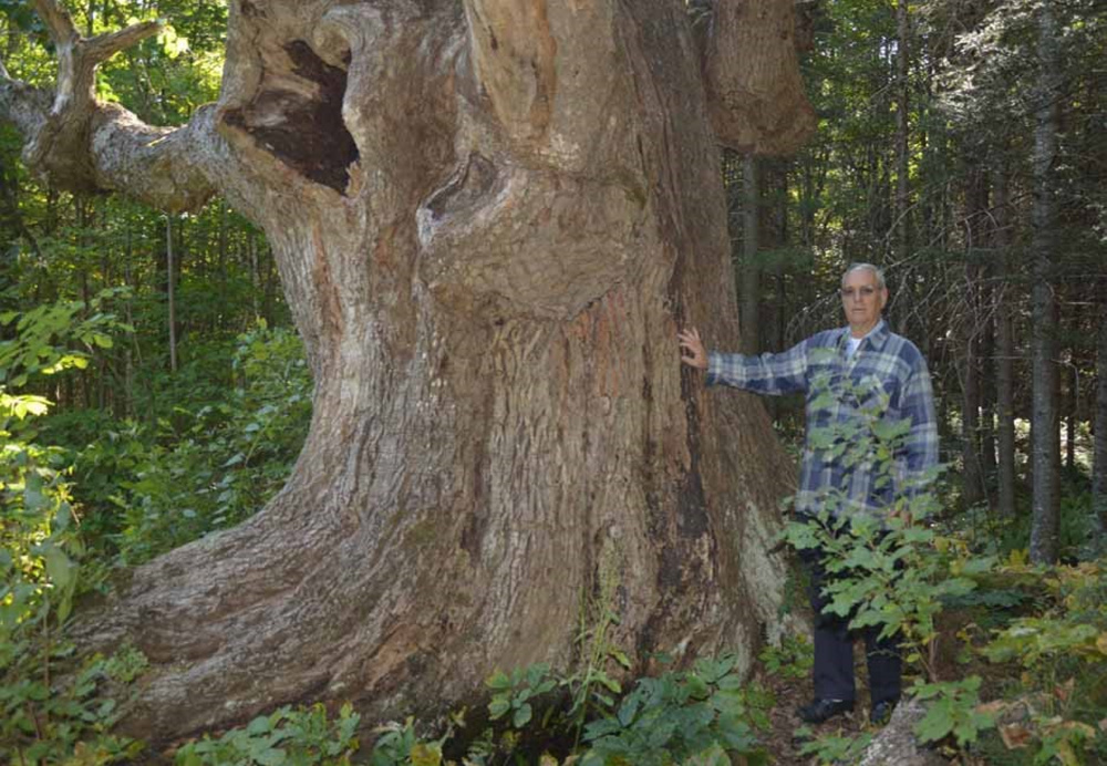 Contributed photo   Duane Prugh stands next to a Champion tree, a White Ash, in South Waterford.