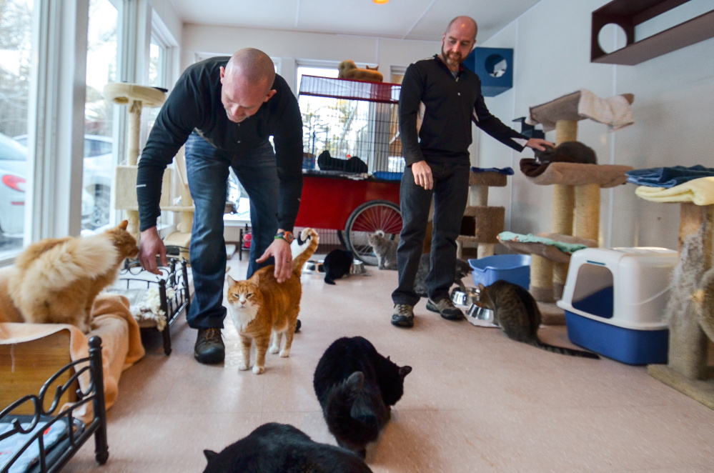 The cats waiting for adoption at the P.A.L.S. no kill animal shelter in Winthrop played host to Dave Dostie, left and Tony Routh, right on Friday as the two prepared to complete their fundraising efforts on behalf of the shelter.