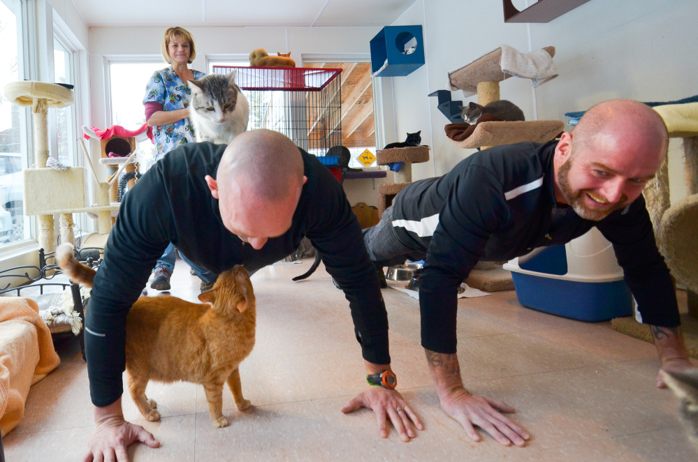 Dave Dostie, of Augusta, left, partnered up with Tony Routh, of Randolph, right, to raise funds by doing push ups the P.A.L.S. no kill cat animal shelter in Winthrop. They wrapped up their campaign Friday by doing a final round of push-ups as shelter executive director Theresa Silsby and the cats look on.