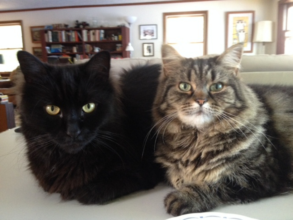 Amy Calder's cats, Pip, left, and Bitsy, during the summer of 2016.