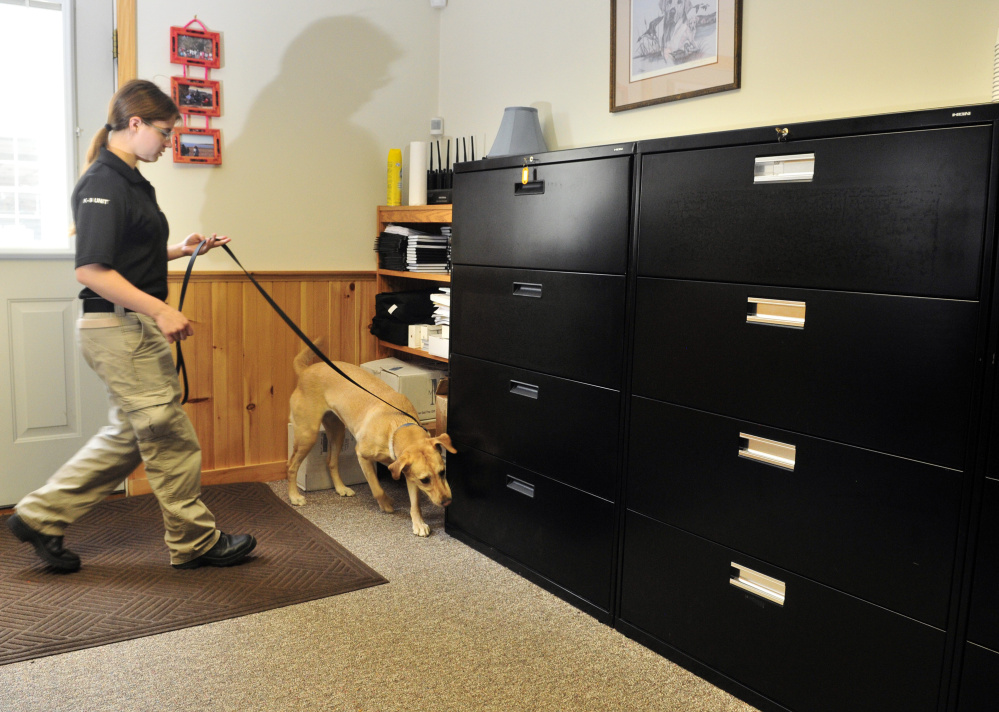 Kendra Laliberte leads her dog, Jordana, through a conference room searching for a container of bedbugs during a demonstration on July 29 at Merrills Detector Dog Services in Readfield, which has been hired by the city throughout the year to check public buildings for bedbugs.