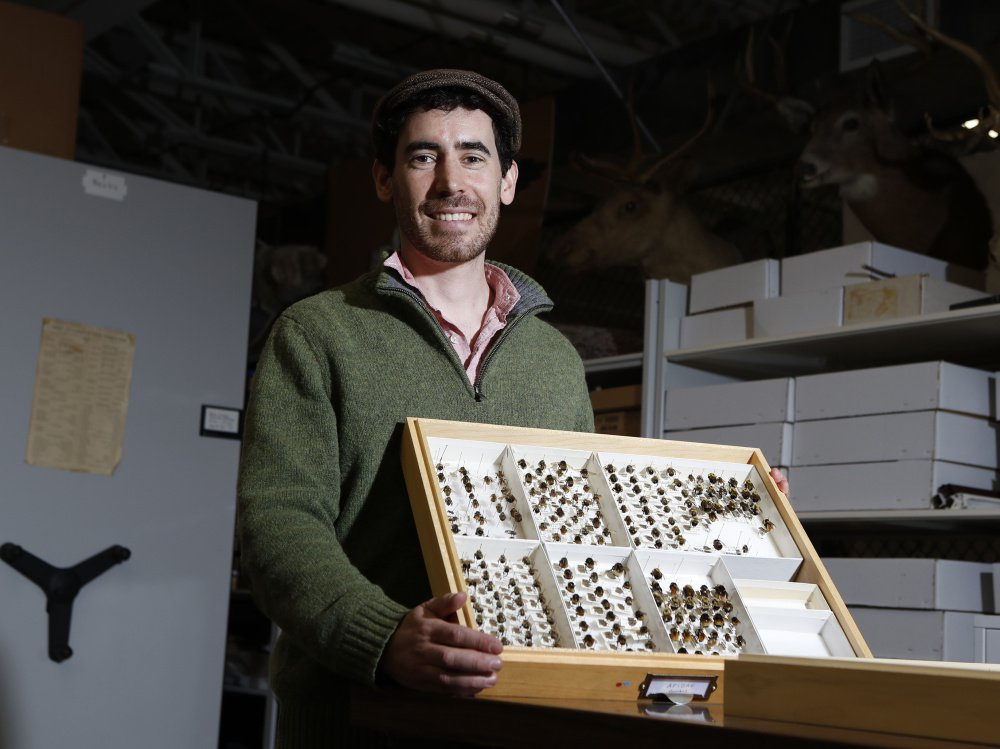 Eric Venturini, an assistant research scientist at the University of Maine's School of Biology and Ecology, with bee specimens at the Maine State Museum Archives in Hallowell.
