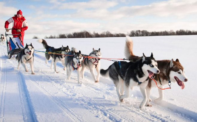 Heywood Kennels in Augusta gives dog sled rides and provides adventures.