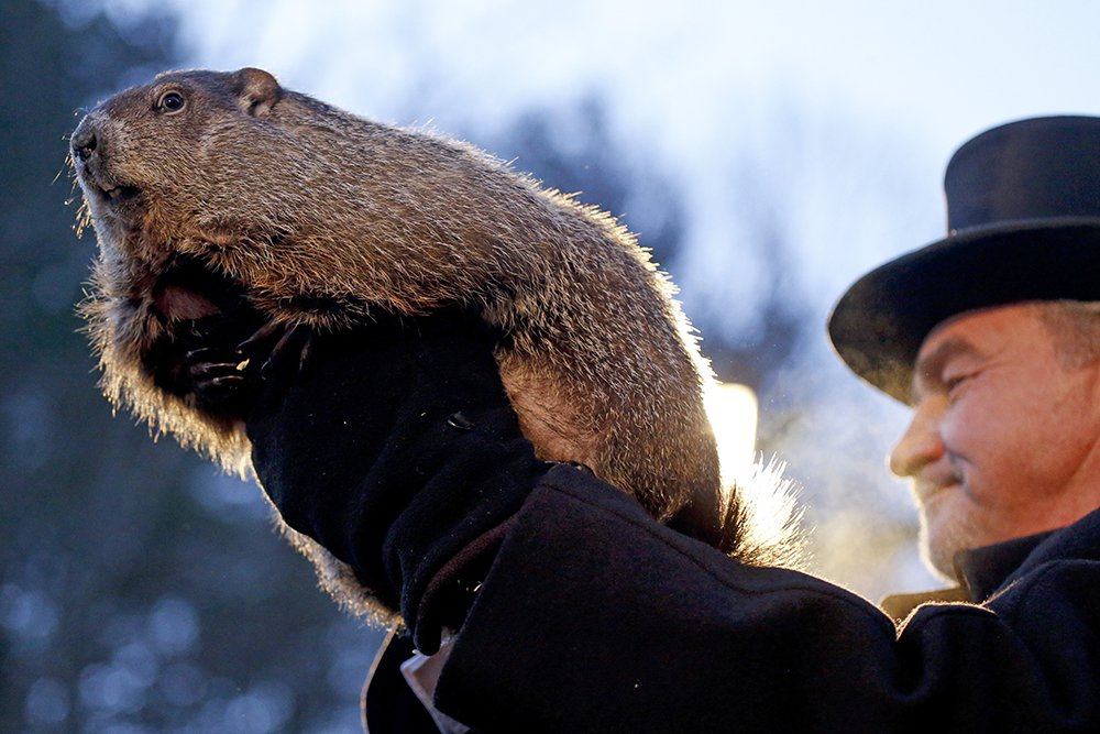 Groundhog Club handler John Griffiths holds Punxsutawney Phil, the weather predicting groundhog, during the annual celebration of Groundhog Day on Gobbler's Knob in Punxsutawney, Pa.