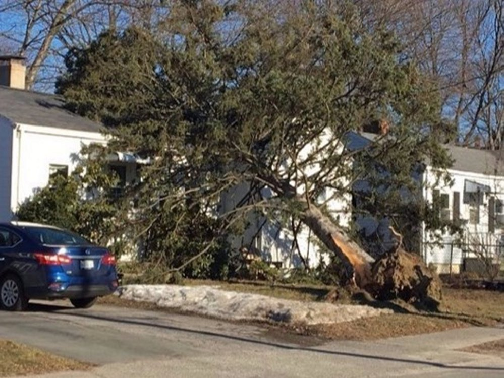 Powerful winds Thursday knocked a tree onto a house on St. John Street in Portland. No injuries were reported, but the tree left several holes in the roof.
