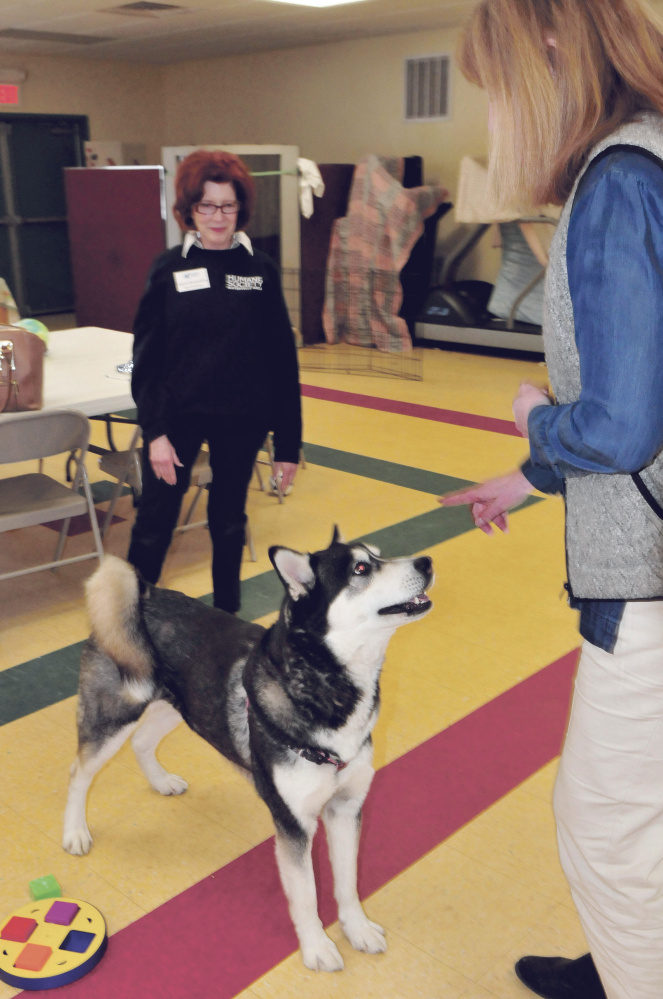 Dakota is the center of attention Thursday between Humane Society Waterville Area board member Joann Brizendine, left, and Director Lisa Smith at the Waterville animal shelter.