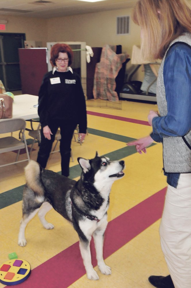 Dakota, a Husky that a judge recently ordered to be euthanized, appears to be the center of attention Thursday between Humane Society Waterville Area board member Joann Brizendine, left, and Director Lisa Smith at the Waterville animal shelter.
