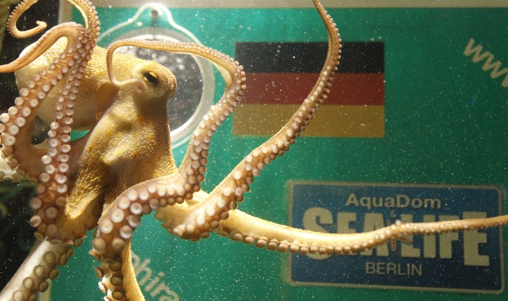 Reuters/Tobias Schwarz The intelligence of octopuses goes far beyond their escape artistry. And studies suggest their massive RNA-level recoding could be related to their intelligence.