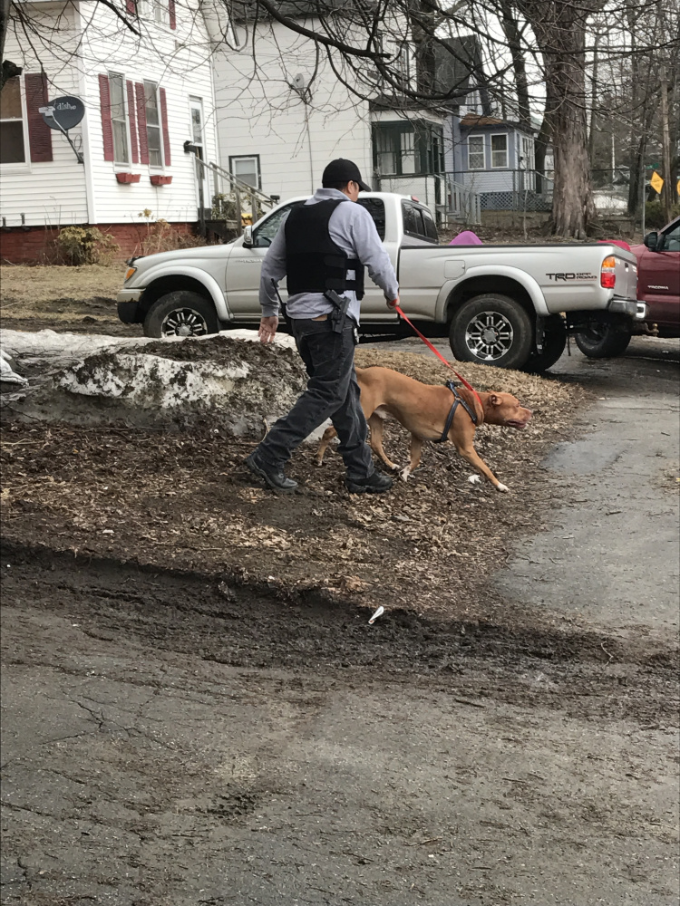 A police officer removes a dog from a residence Friday on Front Street in Waterville after the dog reportedly attacked its owner, who was taken to the hospital. The owner, Daniel Baxter, disputes claims that he abused the dog, Shogun, and says he treated the dog as if it was his child.