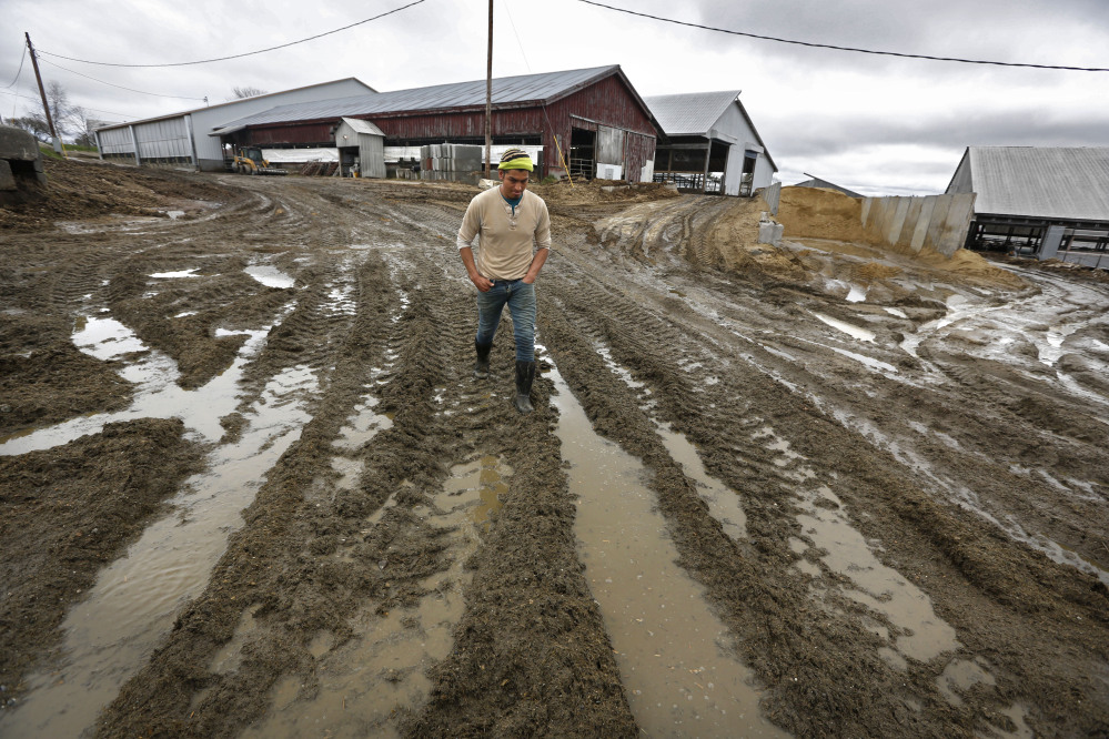 Raoul Rivera walks over muddy ruts left by the tractor he drives at the Brigeen dairy farm Thursday in Turner. Mud season is an annual mucky rite of spring in northern New England, and this year it's gloppier than typical in some parts of the region, and it's hanging around for longer than usual.