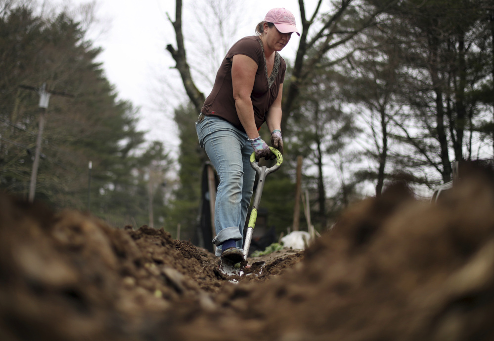 Marisa Tobey digs in the moist soil of her garden, Thursday in Freeport. Above average snowfall combined with recent heavy rains have made for muddy conditions throughout northern New England.