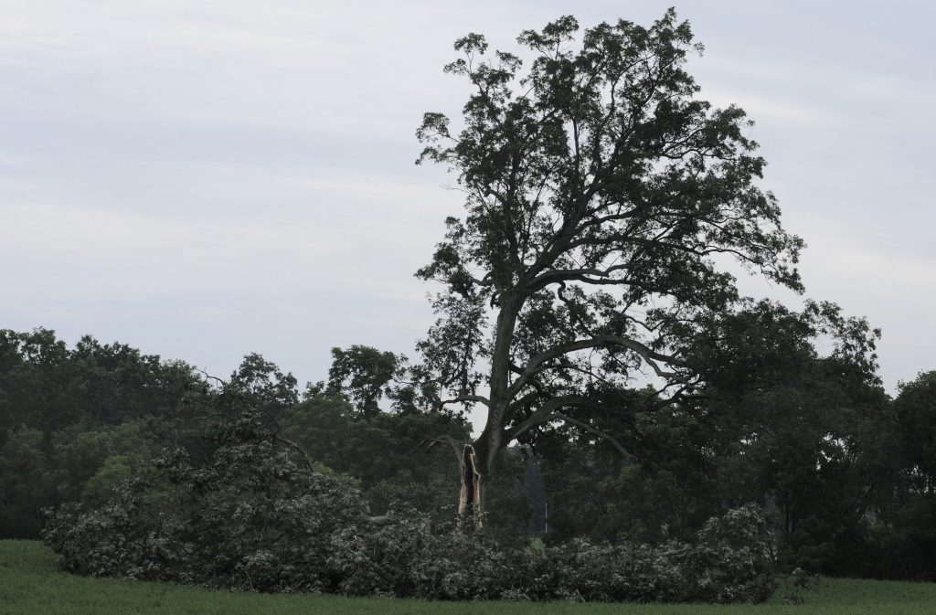 "The tree outside Ohio's Malabar Farm State Park in Ohio that played a key role in the the 1994 film ""The Shawshank Redemption"" is seen here in 2011 after being damaged by high winds."