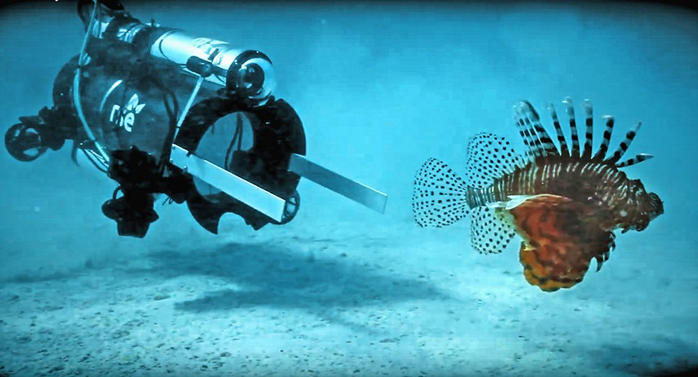 A new robot hunts invasive lionfish in Bermuda on April 18, its first day of testing. It stuns the lionfish with an electric current and then vacuums the live fish  into a container so it can later be sold for food. The robot caught 15 lionfish in 48 hours.