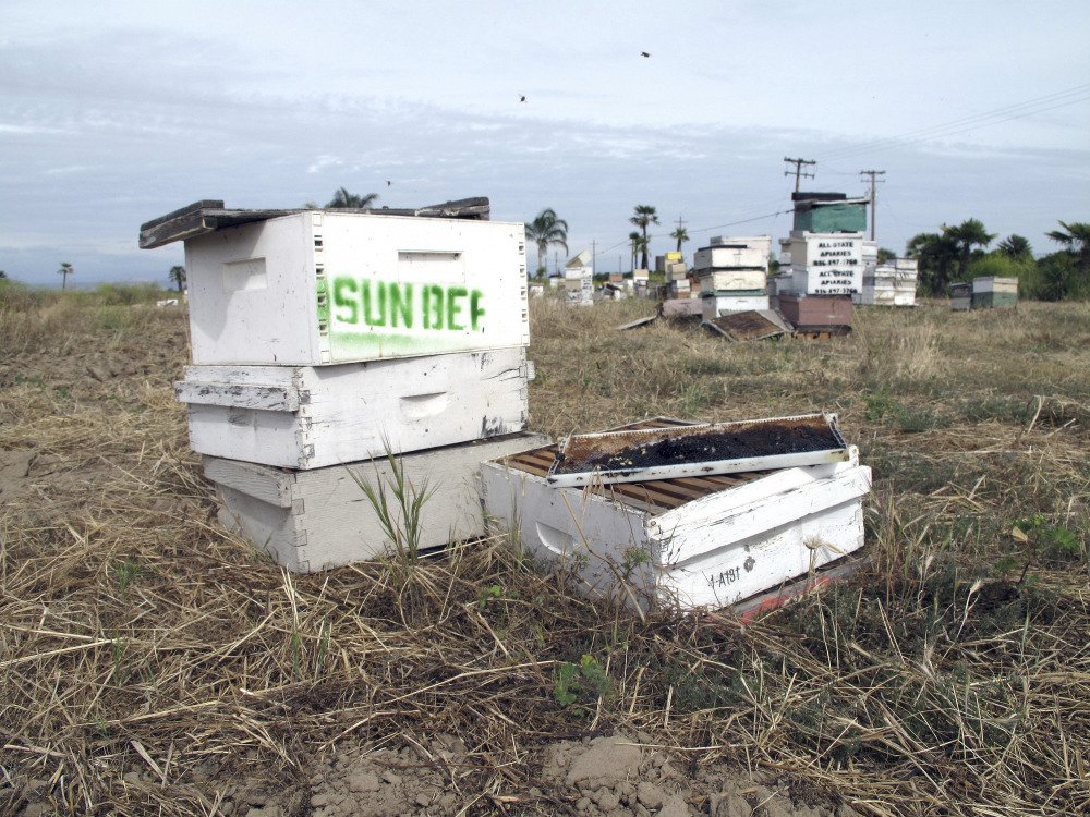 This is one of several of the thousands of beehives stolen in California and recovered near Sanger, Calif. A man is accused of stealing nearly $1 million in hives from California's almond orchards.