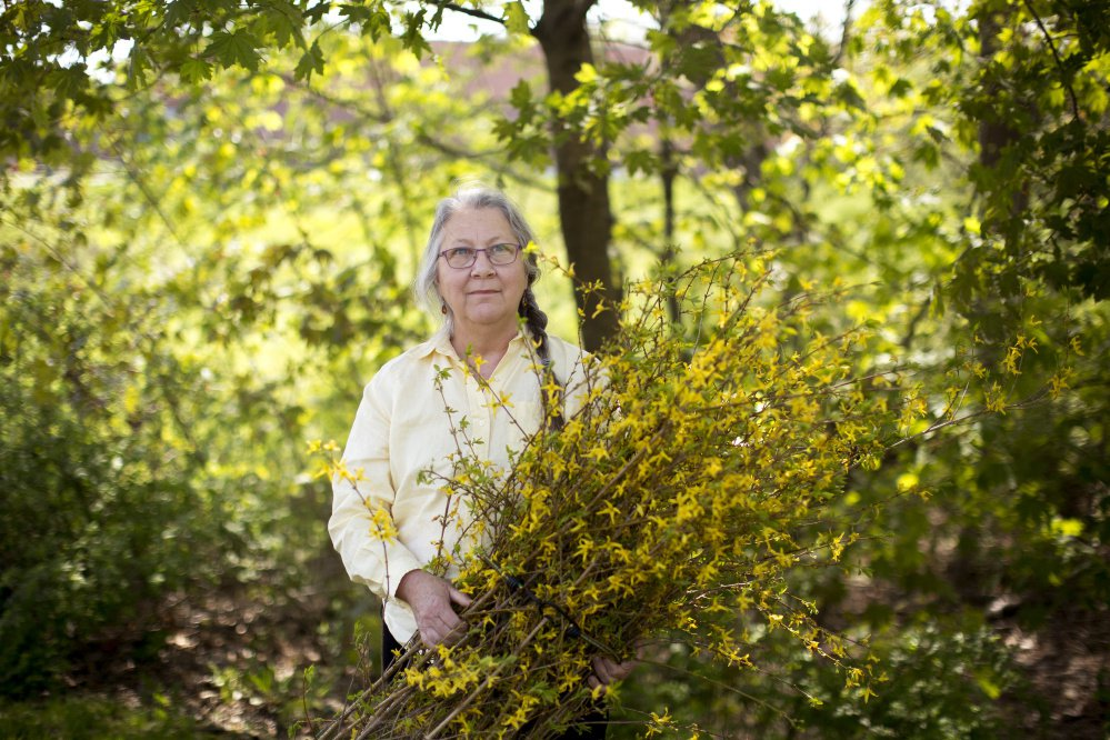Woolwich artist Susan Perrine with forsythia branches she uses in some of her art.