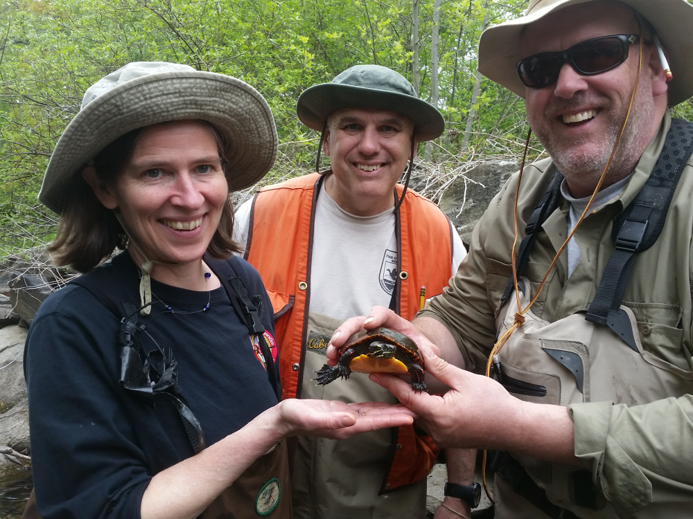 Alewife Restoration Initiative project partners, from left, Landis Hudson, Maine Rivers; Fred Seavey, U.S. Fish & Wildlife Service; and Nate Gray, Maine Department of Marine Resources take a break from data collection to interact with a local resident, an Eastern painted turtle. The goal of the project is to improve habitat and provide food for creatures including turtles, as well as eagles, osprey and mink.