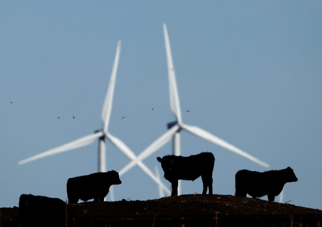 Cattle graze in a pasture against a backdrop of wind turbines which are part of the 155 turbine Smoky Hill Wind Farm near Vesper, Kansas. Even if President Donald Trump withdraws U.S. support for the Paris climate change accord, domestic efforts to battle global warming in dozens of states will continue.