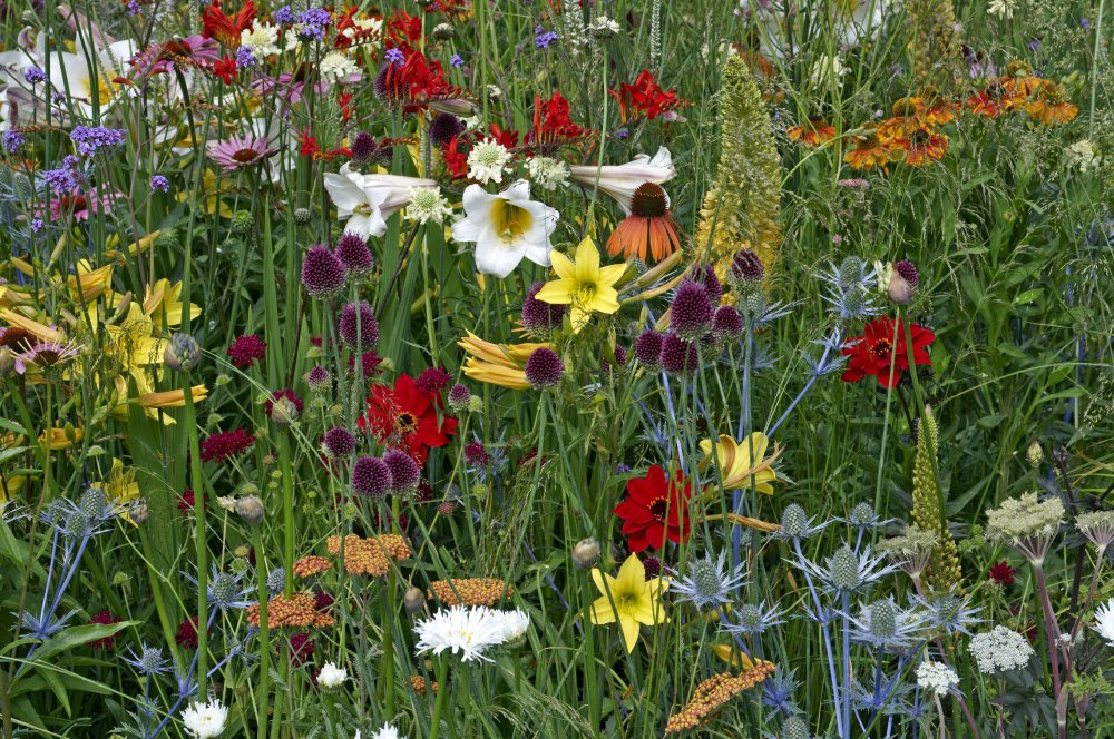 A mix of wild and cultivated flowers gives this garden a kaleidoscope feel.