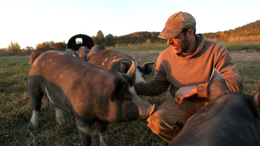 Bob Comis has provided a humane — even idyllic — life for the pigs he farms.
