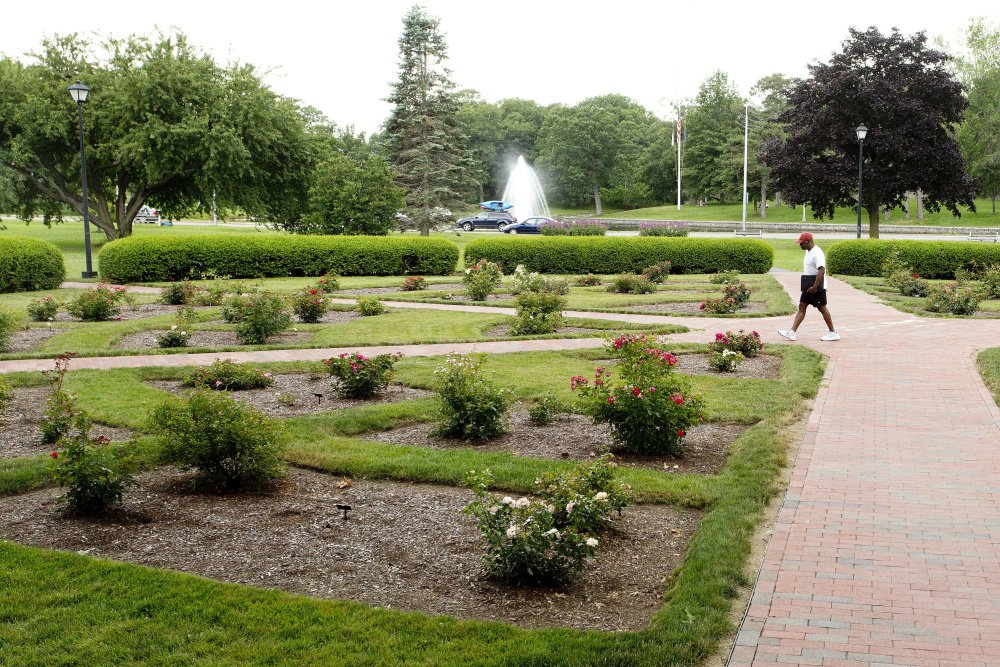 The Karl Switzer Rose Circle in Deering Oaks is named for the man who was superintendent of the park from 1939 to 1972. Four years ago, it became a test garden for roses than require significantly less water, fertilizer and manpower to maintain.