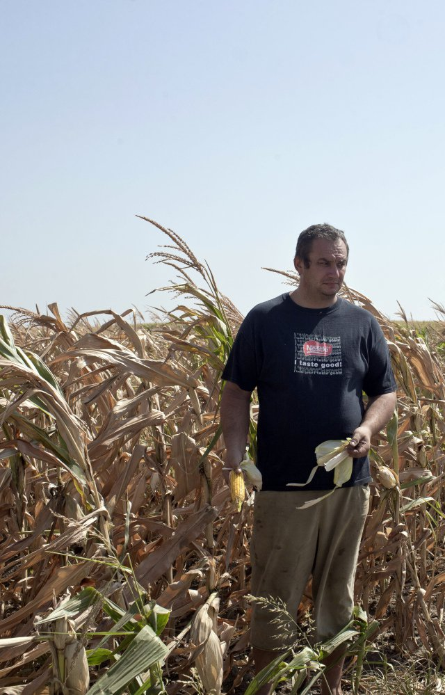 Farmer Pavel Tordaj stands in his field of corn, which has been decimated by drought, in the village of Padina in northern Serbia on Thursday.