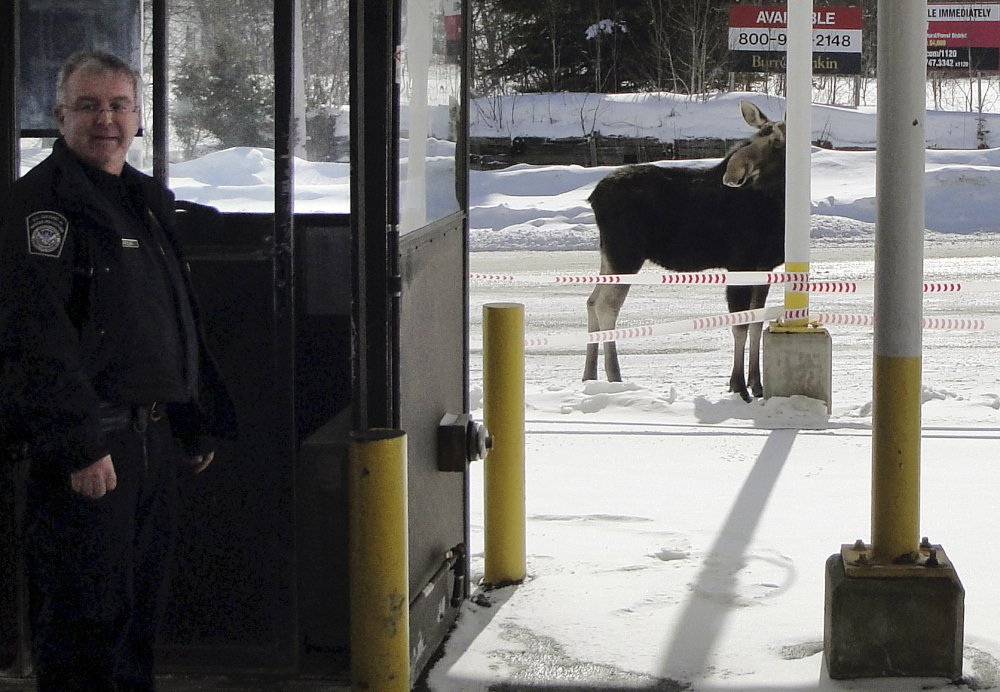 A moose stands at the Norton, Vt., border crossing to Quebec, Canada, in this 2016 photo. Maine and Vermont are on the list of 21 locations considered difficult to fill.