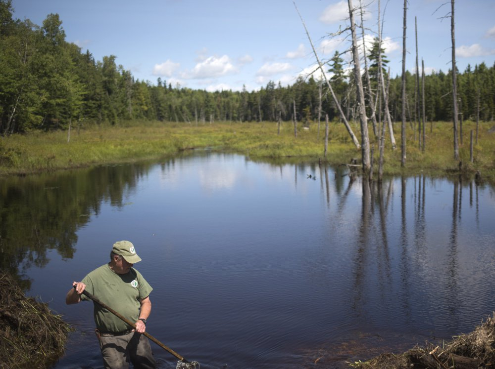 Tom Chase clears a beaver dam that washes out an entrance road at Katahdin Woods and Waters National Monument, one of a number of national monuments whose status could downsized or eliminated following a federal review ordered by President Trump.