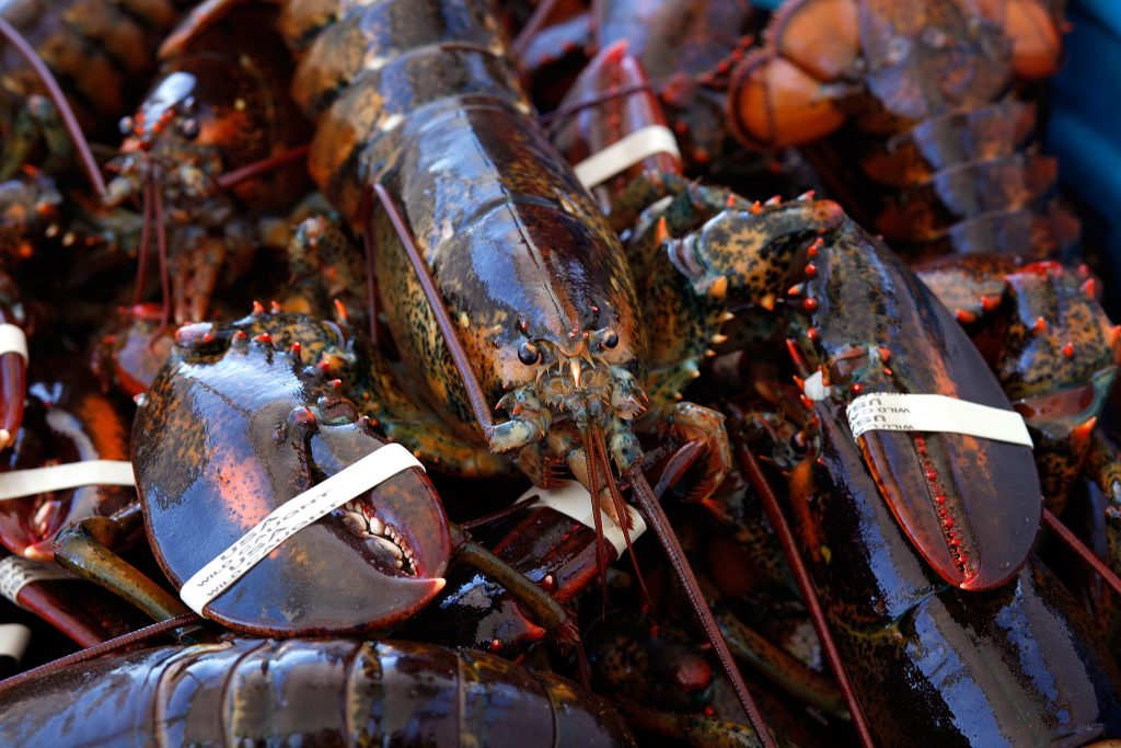 Early indications show 2018 was a strong year for lobster landings in Maine