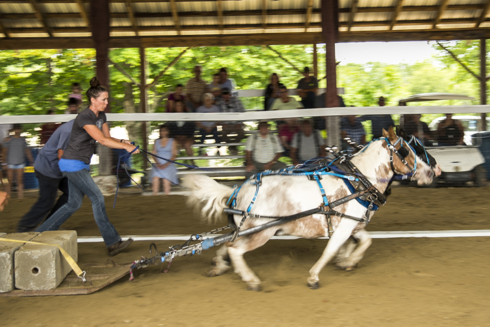 Mini-horses are shown here during a pulling completion Saturday at the Monmouth Fair.