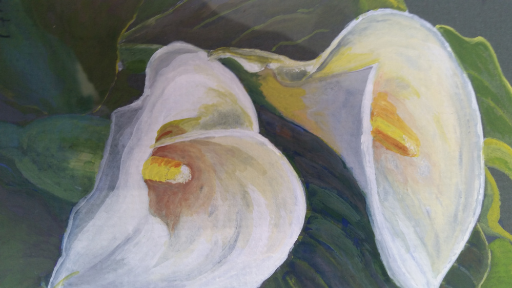 Wiscasset Garden Club members will create complementary arrangements for paintings like this watercolor of calla lilies by Virginia Forrest for the Aug. 18 opening of Color in Bloom at the Maine Art Gallery in Wiscasset.