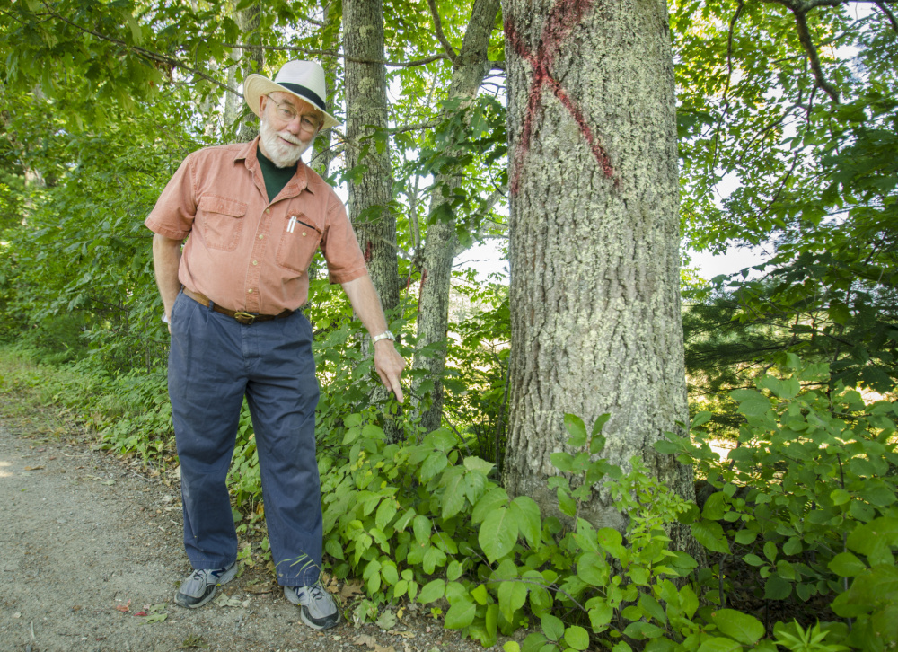 Whitefield Selectman Frank Ober points Monday to the where a tree is growing close to the edge of Hollywood Boulevard in Whitefield. The town marked trees with an X to show they are proposed for removal.