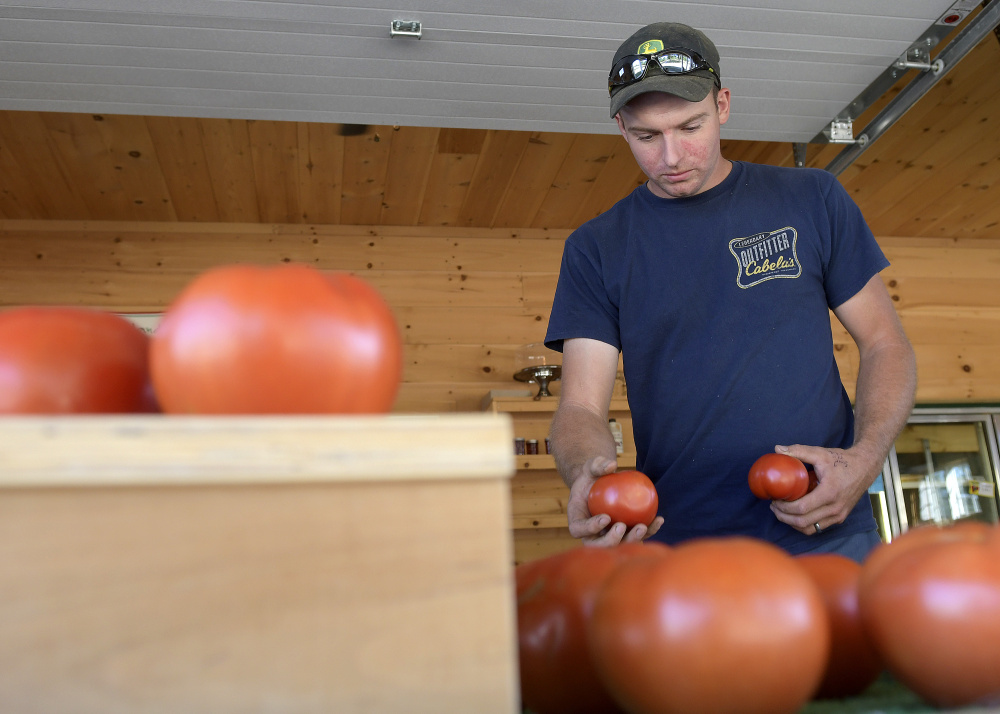 Steve Christianson sorts tomatoes Monday at the farm he operates with his wife, Caroline, in Readfield. Christianson said conditions at Christianson Farm are dry but not as drastic as the drought last year.