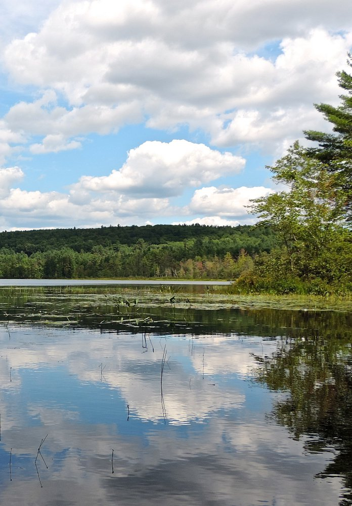 View south from northern end of Heald Pond. Michael Perry photo