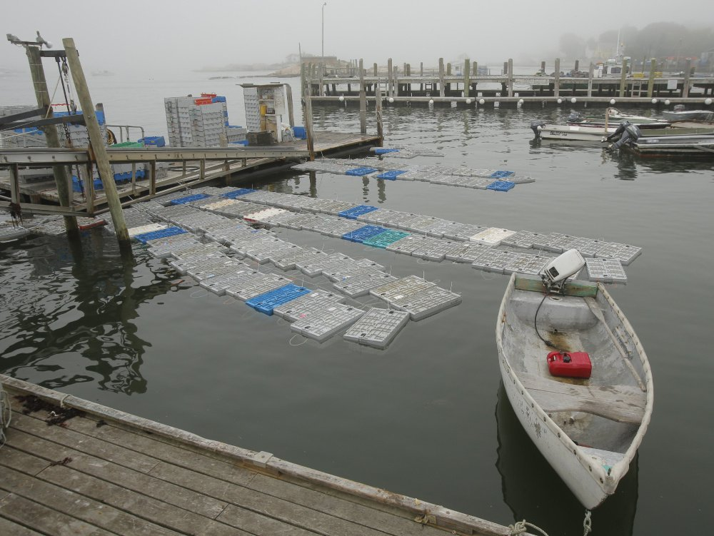 Crates full of lobsters float off the docks of the Stonington Lobster Co-Op last year. The co-op, in the heart of Maine's lobstering capital, says its catch is down about 25 percent this season. In 2016, Maine broke records for annual catch – more than 130 million pounds – and industry value.