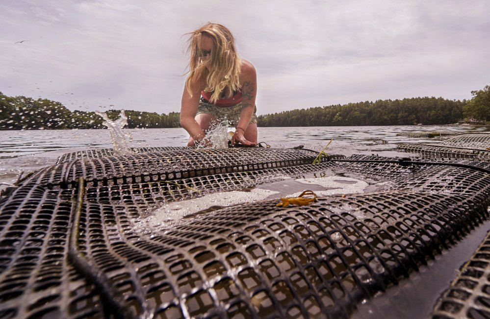 Sarah Wineburg cleans a bag of oysters that she is raising in the Damariscotta River, one of about a half-dozen gigs she's cobbled together to earn a living this year.