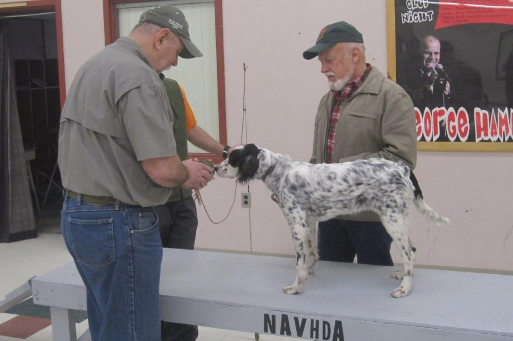 Peter Wade demonstrating with Arnold Borthwick and English Setter Holly.