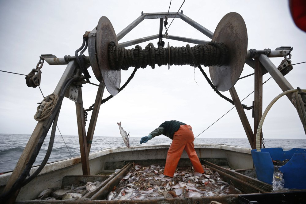 David Goethel sorts cod and haddock while fishing aboard his trawler off the coast of New Hampshire. The federal government is close to enacting new rules about New England ocean habitat that could mean changes for the way it manages the marine environment.