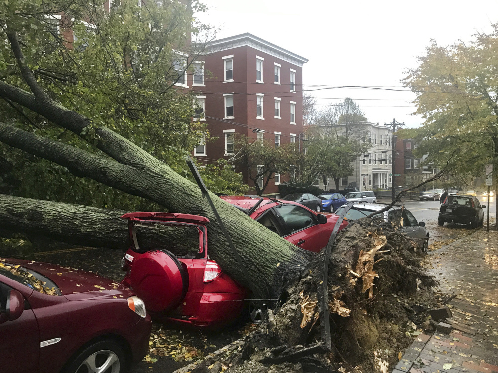 """Climate change increases the likelihood of severe weather, like the recent storm that toppled this and thousands of other trees, but Gov. LePage, who once said, """"I do not believe in the Al Gore science,"""" has consistently refused to admit that global warming is a threat to Maine."""