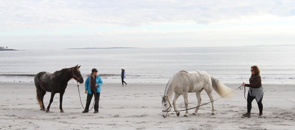 Owners walk their horses at Pine Point Beach in Scarborough after a ride to Old Orchard Beach. Scarborough has passed an ordinance amendment that now requires horses using the beach to wear manure containment systems.