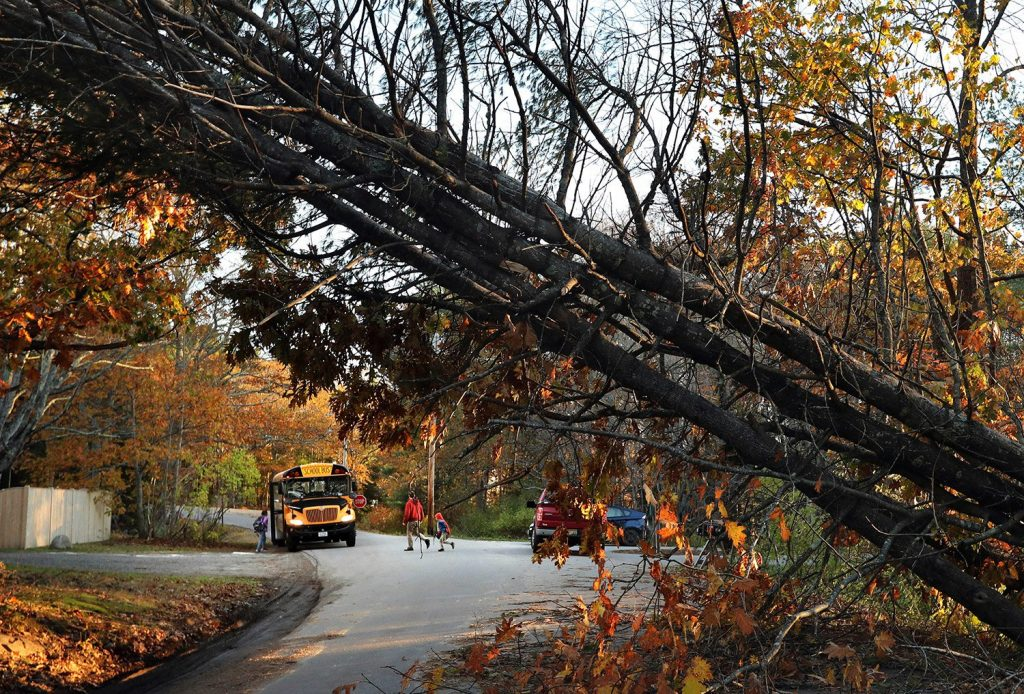 A father walks his child to a school bus at a temporary pick-up location on Nov. 1 in Freeport, where storm-toppled trees were common in the late-October storm. Communities are still cleaning up, but the Portland area could experience high gusts again beginning Thursday night.