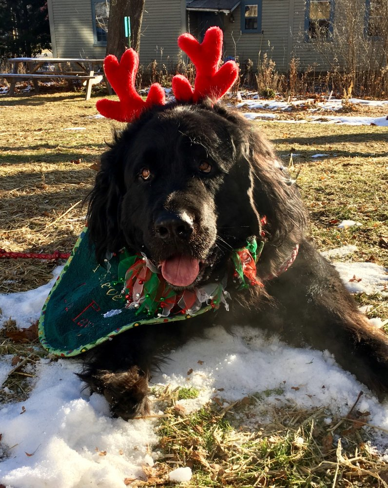 Fritz, a rescued dog with a woeful tale, has become the iconic Reindeer-Dog at the Friends of the Wiscasset Library's holiday kids-only shopping event. The event is set for 9 a.m. to 2 p.m. Saturday, Dec. 9, at the library.